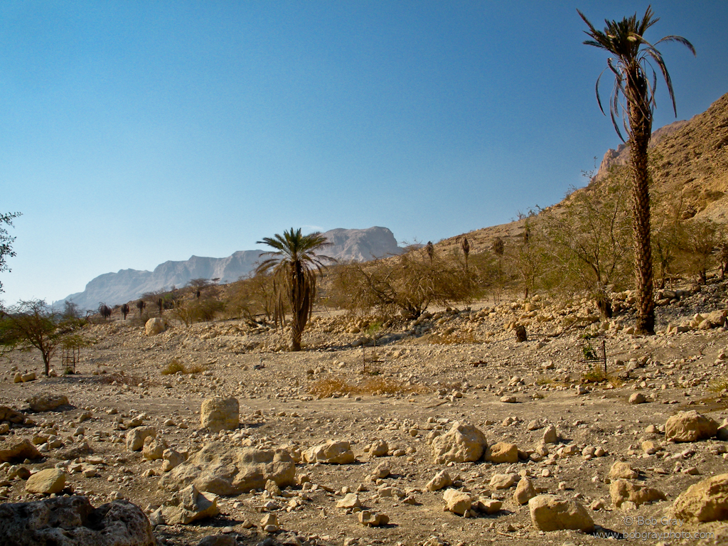 Ein Gedi (photo by Shea)