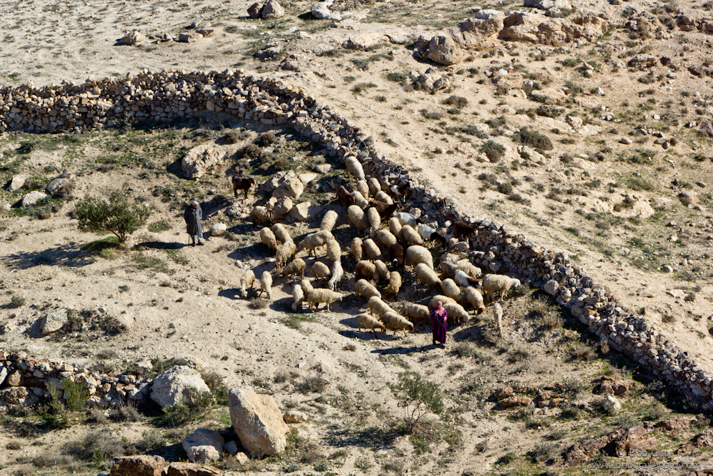 Older couple herding sheep below the Herodion
