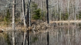 Beaver Pond above Orris Falls